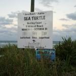 Sea Turtle Nest Count Juno Beach