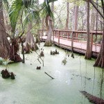 Bush Wildlife Sanctuary