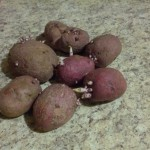 Can't Wait To Plant These Potatoes